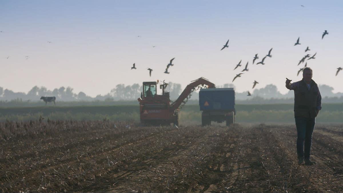 De Kunst van het Boeren
